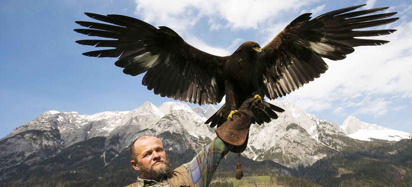 Foto: älterer Mann (Falkner) mit Blick zum Betrachter hält einen Adler mit ausgebreiteten Flügel auf seinem rechten ausgesteckten Arm mit Handschuh in die Höhe. Beschneiter Bergipfel und Himmel im Hintergrund.